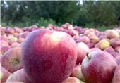 قیمت میوه و ترهبار امروز دوشنبه 12 آذر در بازار ارومیه +جدول