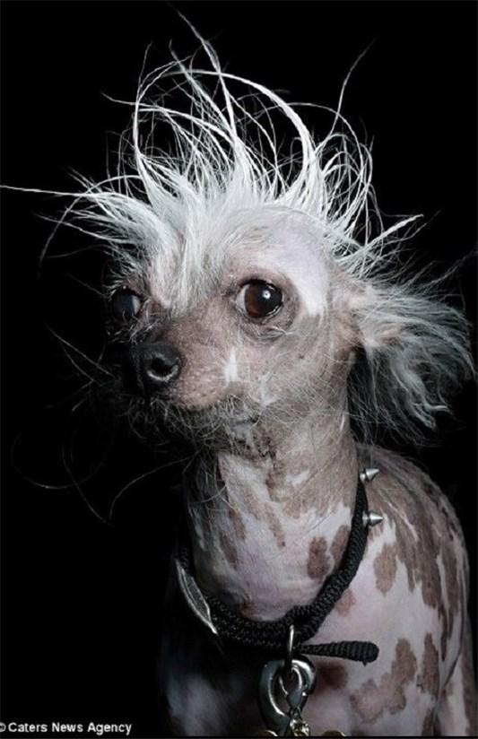 وحشتناک ترین سگ دنیا