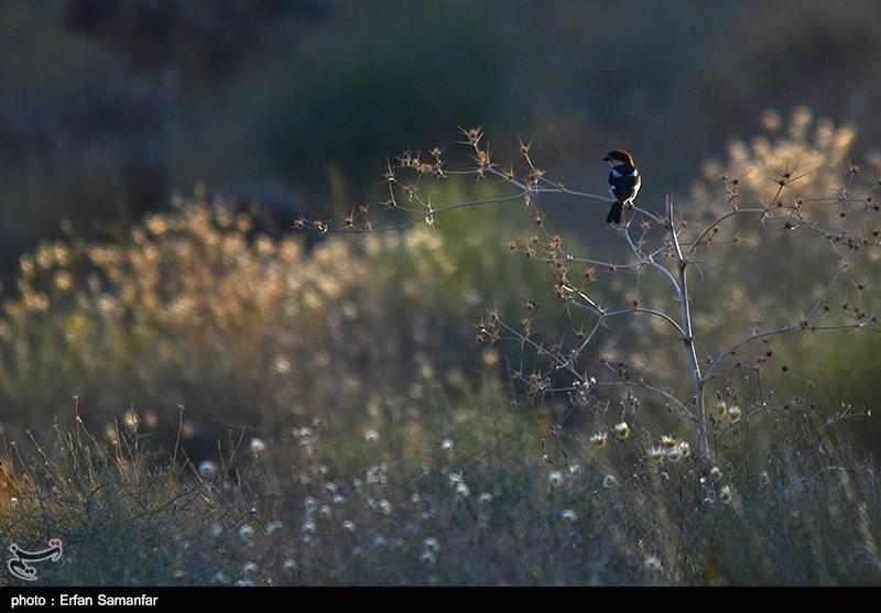 Iran's Bamou National Park - Tourism news
