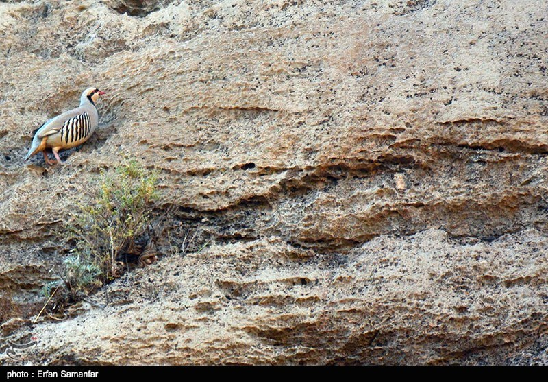 Iran's Bamou National Park - Tourism news