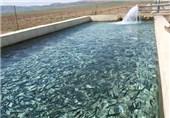 16 هزار تن ماهی سالانه در استان لرستان تولید میشود