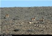 """نقش """"میراث پارسیان"""" در مدیریت مستقل پارک ملی گلستان چیست؟+پاسخ محیط زیست"""