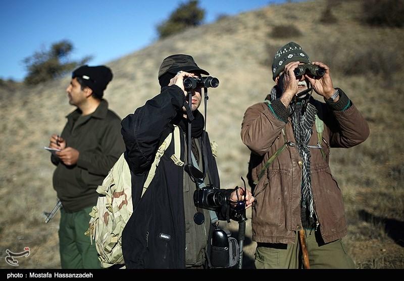 سرشماری وحوش در استان گلستان آغاز شد