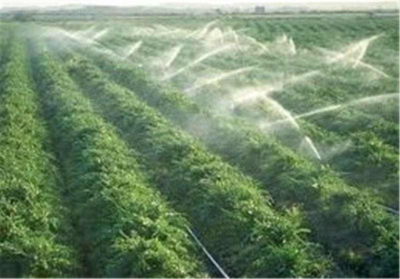 استفاده از آبیاری نوین در باغات چای گیلان و مازندران افزایش یافت