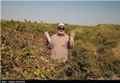 تسویه سود سهام عدالت روستاییان و عشایر از فردا انجام میشود