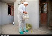 طرح واکسن احشام در کرمانشاه