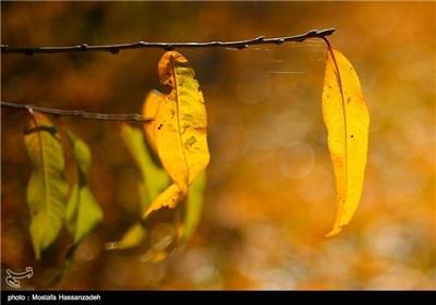 طبیعت پاییزی گرگان - گلستان