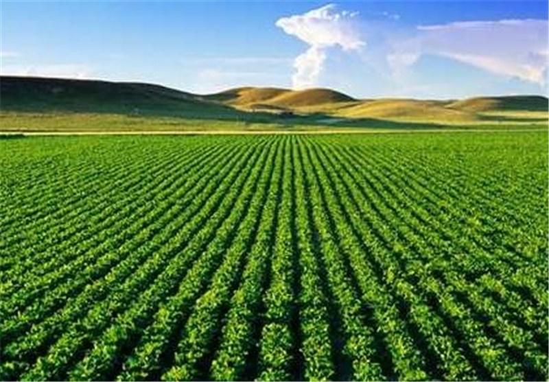 316 طرح کشاورزی در سیستان و بلوچستان به بهرهبرداری میرسد