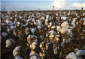 واردات بذر کتان از قزاقستان 2 برابر شد