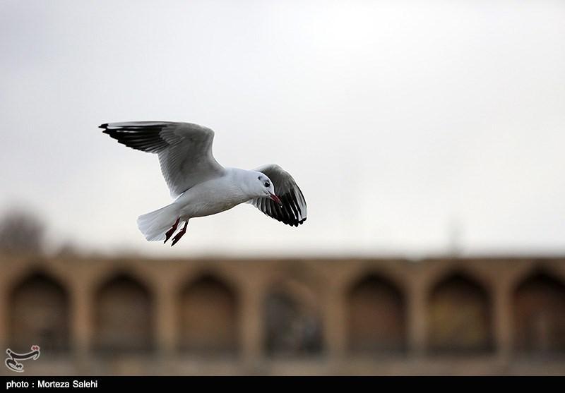 Iran's Zayanderud River Hosts Migratory Birds
