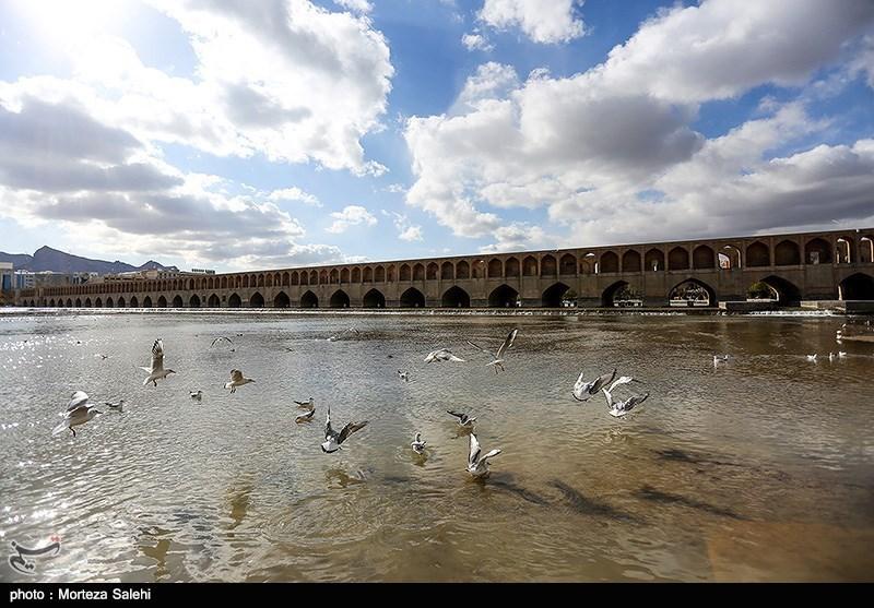 پرندگان مهاجر زاینده رود - اصفهان