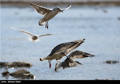 Iran's Zayanderud River Hosts Migratory Birds