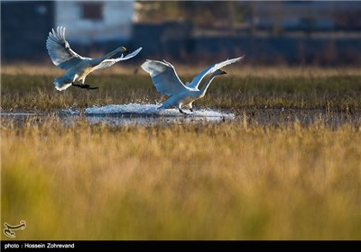 Iran's Beauties in Photos: Sorkh Rood Wetlands