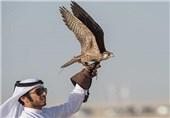 شکارچی قطری عراق