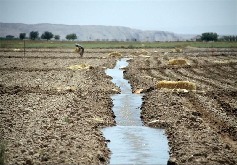 اجرای آبیاری میکرو در سطح ۷۰۰ هکتار از اراضی کشاورزی استان بوشهر