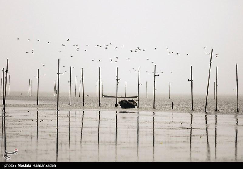 ممنوعیت شکار پرندگان مهاجر در استان گلستان لغو شد