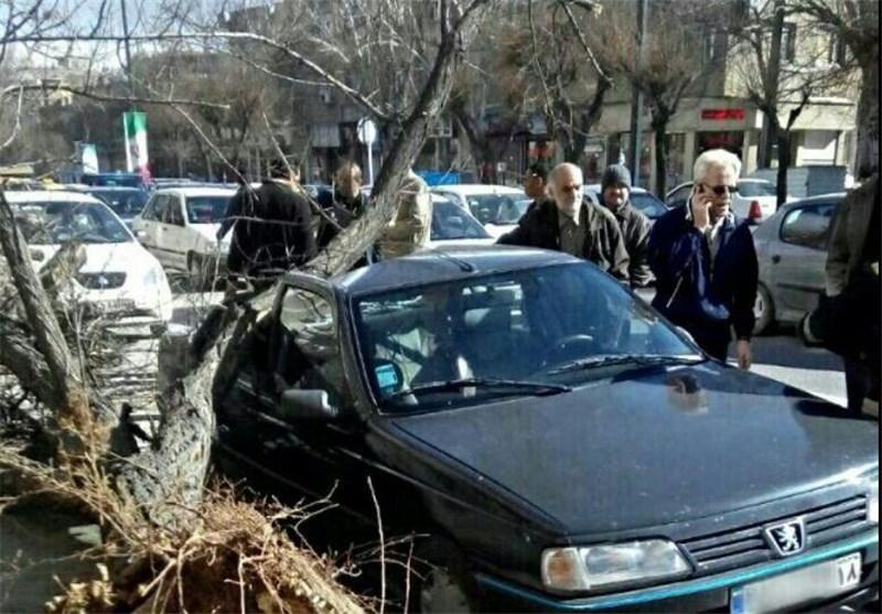 سقوط درخت در همدان
