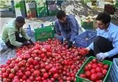 مرکزی| حمایت از احیای باغات انار بیش از گذشته در ساوه اهمیت دارد
