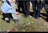 12 هزار نهال به یاد شهدای استان لرستان در کوهدشت کاشته شد