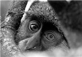 تصاویر زیبای عکاس 18 ساله فرانسوی از حیات وحش سراسر جهان