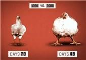 عمرانی: تولید و انبوهسازی محصولات تراریخته 5 سال تعلیق شود/حیات غیب: سطح کشت تراریخته در دنیا از 2015 روبه کاهش است