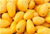 """هنوز مجوز واردات انبه صادر نشده/ تمام انبههای موجود در بازار خراسانرضوی """"قاچاق"""" است"""