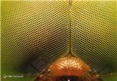 عکاسی ماکرو از حشرات2