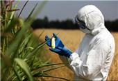 موج گسترده مخالفت با دستکاری ژنتیک/38 کشور جهان رسماً کشت تراریخته را ممنوع کردند