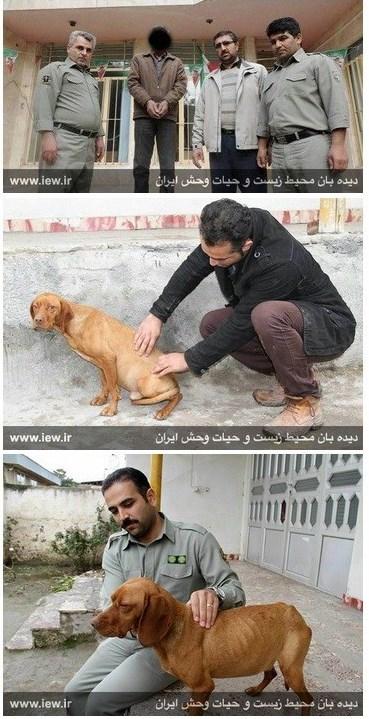 کانال+تلگرام+سگ+های+وحشی