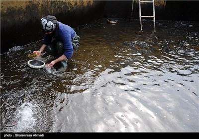 به مناسبت روز مهندس - حوضچه پرورش ماهی