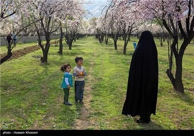 جمال الطبیعة فی شیراز