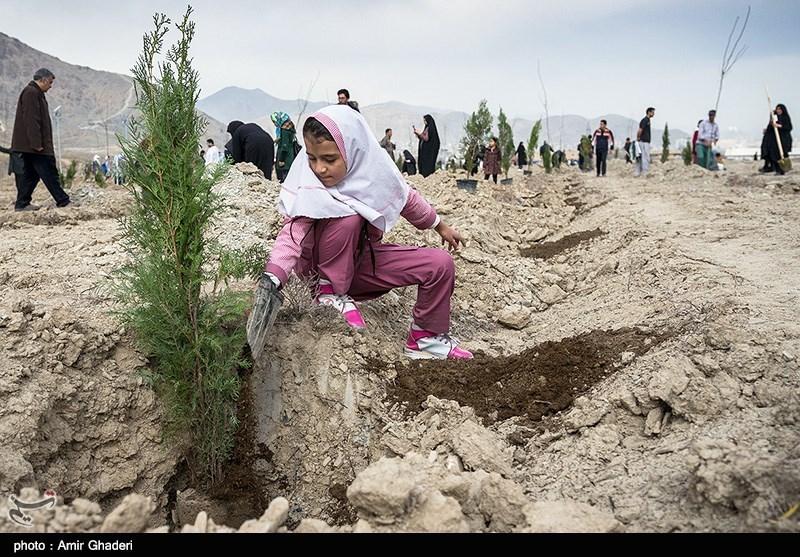 اردوی درختکاری به یاد 176 شهید سوادآموز در استان بوشهر آغاز شد