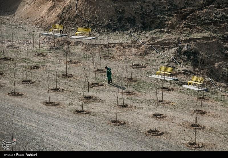 مراسم درختکاری و بهره برداری از 1000 هکتار فضای سبز در اطراف تهران