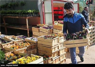در آستانه نوروز - بازار گل و گیاه