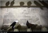 سقوط مرگبار پسر نوجوان حین گرفتن کبوتر