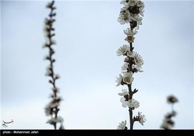 Iran's Beauties in Photos: Blooms in Iran's Northern City of Zanjan