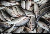 بازار نوروزی فروش ماهی در بندر ترکمن