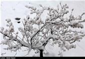 بارش برف ارتفاعات شهرستان رودسر را سفیدپوش کرد