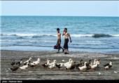 مسافران نوروزی در نمک آبرود،سلمانشهر و تنکابن