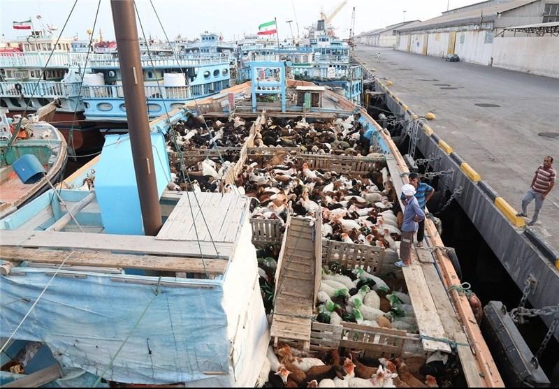 70 درصد صادارت و واردات دام کشور از هرمزگان انجام میشود