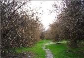 خرمآباد|هشدار جهاد کشاورزی لرستان نسبت به احتمال وقوع پدیده سرمازدگی باغات