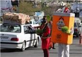 جمع آوری بیش از 10 تن سبزه در شیراز/تبدیل سبزهها به کود کمپوست