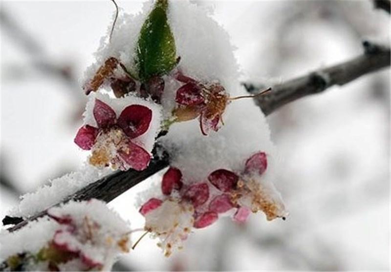 زمستان در بهار