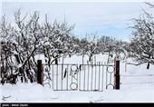خسارت برف به باغات - اهر