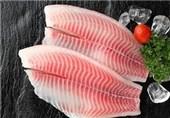 """مصرف ماهی """"تیلاپیا"""" موجب تشدید بیماریهای قلبی، آسم و آلرژی میشود"""