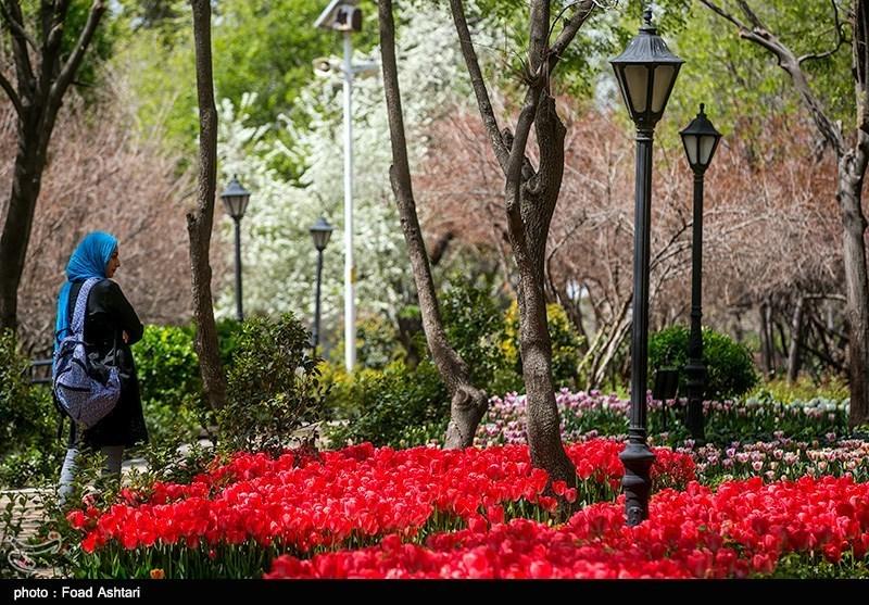 افزایش سرانه فضای سبز به 16 مترمربع برای هر شهروند تهرانی