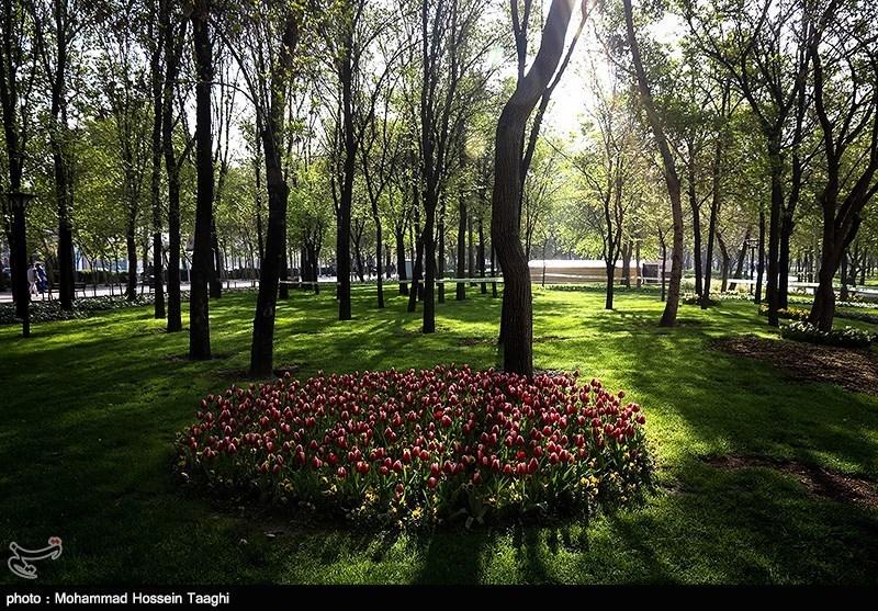 جشنواره لاله ها در پارک ملت مشهد