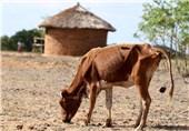 خشکسالی آفریقا11