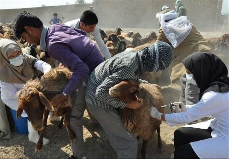 واکسیناسیون رایگان تب برفکی در خراسان شمالی آغاز شد