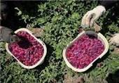ضوابط صادرات گیاهان دارویی و صنعتی اعلام شد